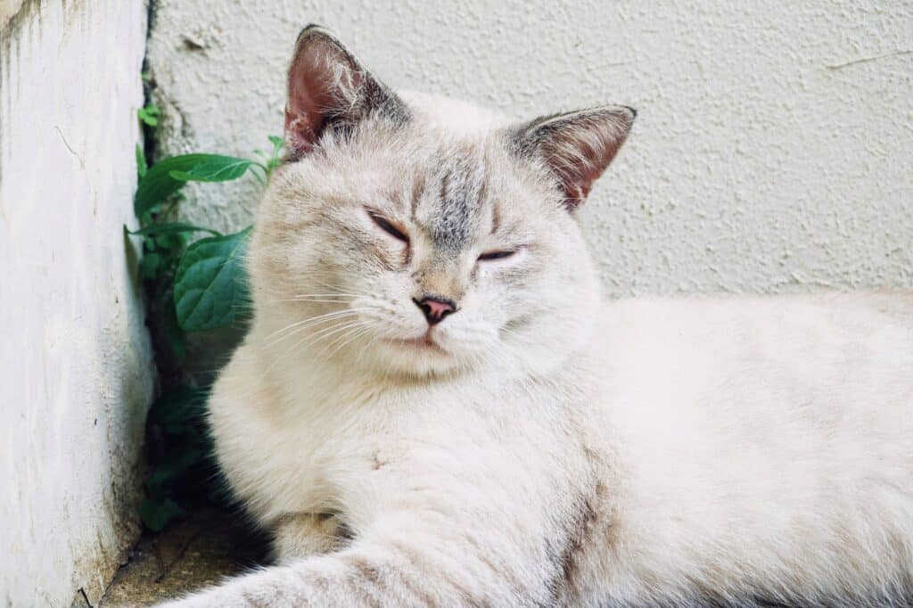 cats blinking their eyes at you. Cats show affection for humans