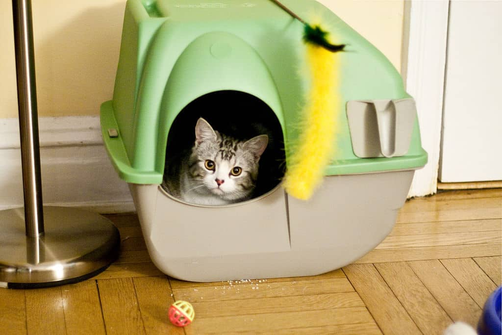 Cats don't like the smell of a dirty litterbox