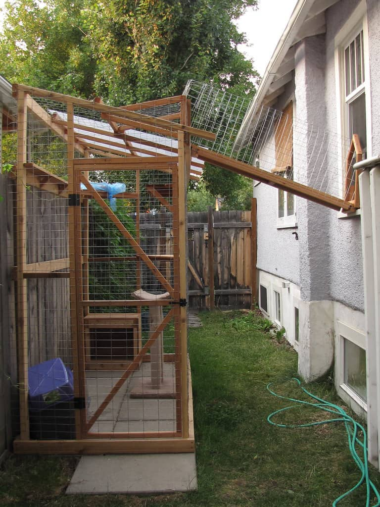 catio can keep your cat safe outside