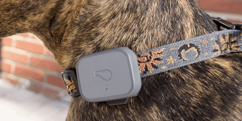 cat tracking device