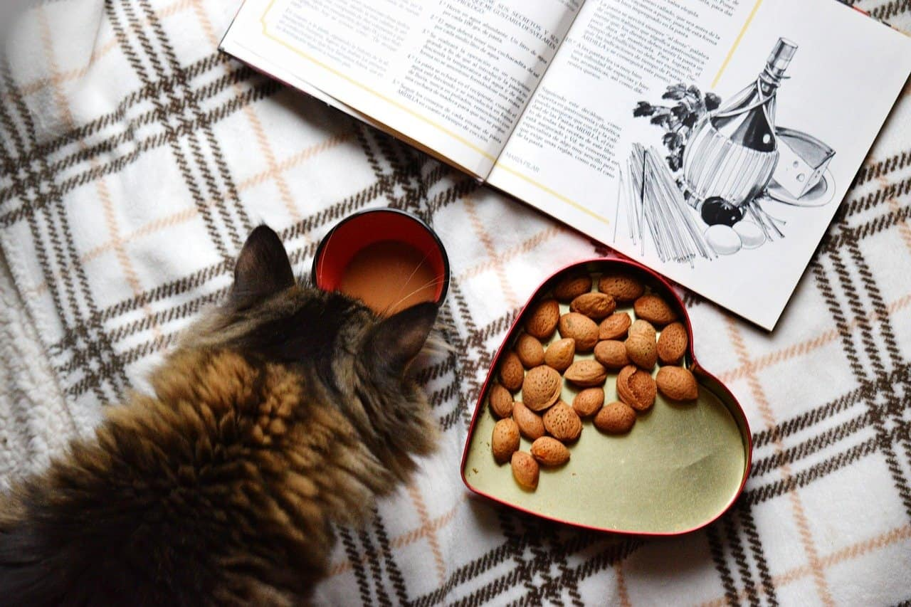 cat eating from heart shaped bowl