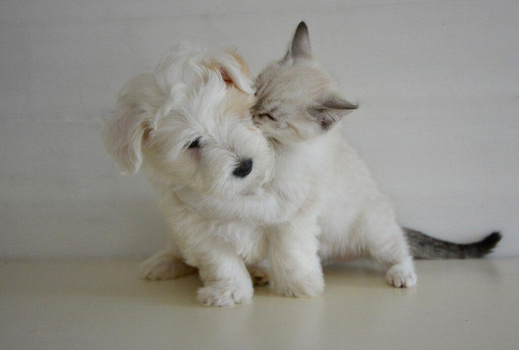 cat showing affection to a dog