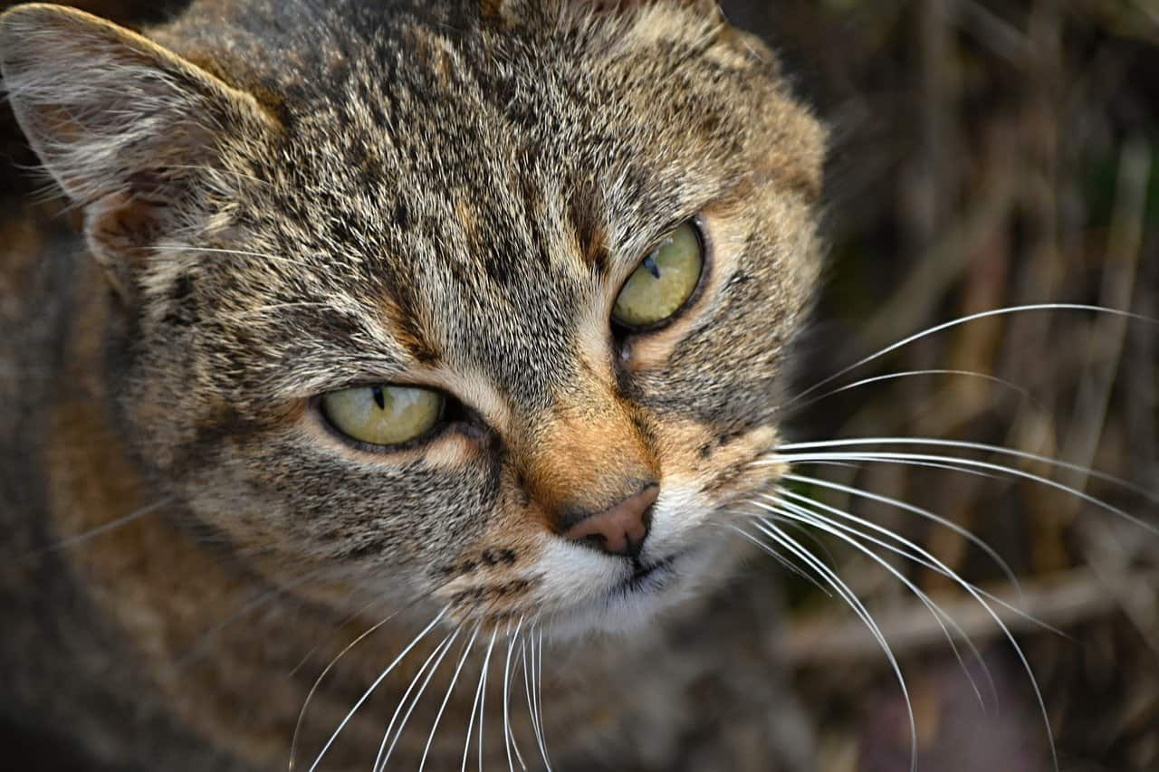 cat with a grudge